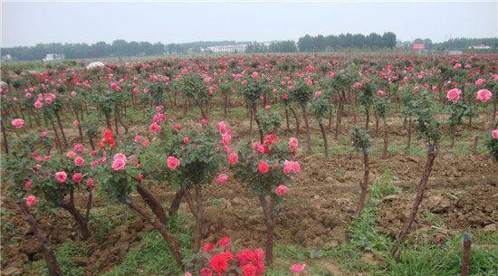 适合武汉种植的果树